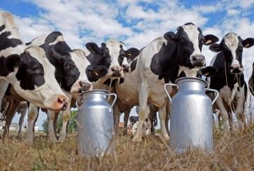 Novi udar na proizvođače mlijeka: smanjuje se otkupna cijena