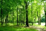 Ulaganja u šumsku infrastrukturu: Prijave na natječaj za 100% potpore