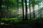 22. travnja  – Dan planeta Zemlje, posvećen zaštiti i obnovi šuma