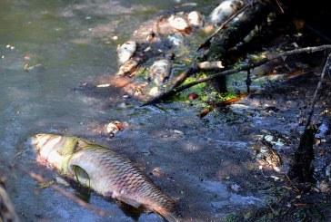 Pomor ribe u Bosutu,  proglašen 1. stupanj zaštite voda