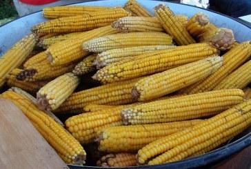 9. KUKURUZIJADA – Najukusniji  kuhani kukuruzi su u Gornjim Andrijevcima