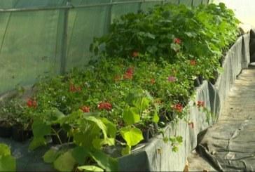 Suradnja inovatora i BioTech Centra: uz pomoć ozona do učinkovitije zaštite i kvalitetnije prihrane biljaka