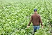 Malim poljoprivrednicima 150 milijuna kuna za projekte – započelo izdavanje odluka za 6.3.1.