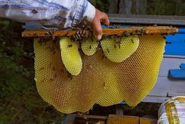 Javni natječaj za prikupljanje i odabir projekata primijenjenih istraživanja u pčelarstvu