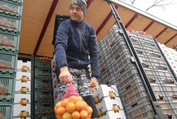 Petar Bjeliš, uzgajivač mandarina iz Opuzena: ovogodišnji  urod jako velik, mandarine  vrhunske kvalitete, ali nema dovoljno berača…